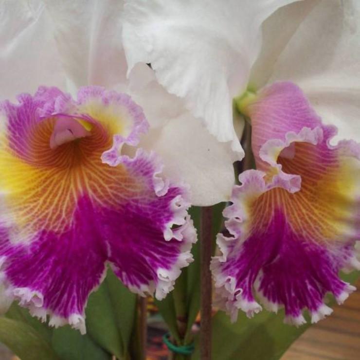 Flores na feira