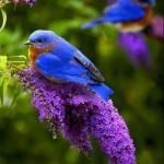 Flores roxas, lilazes, purpura, blog detalhes magicos