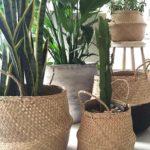 a-escolha-dos-vasos-cestos