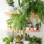 plantas-dentro-de-casa